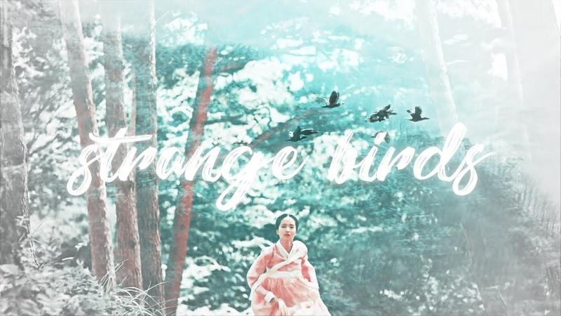Strange birds.   mr. sunshine