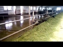 Условия жизни коров в Неглюбка калхоз дружба