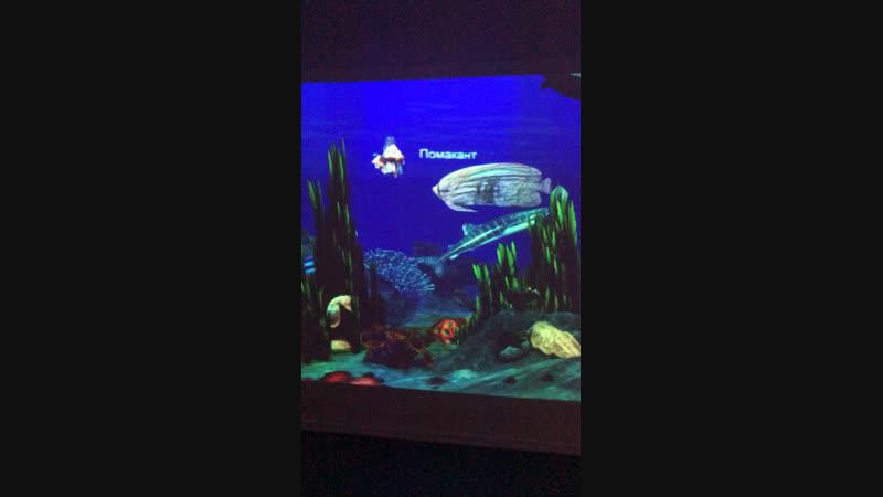 Запускаем нарисованных рыбок в аквариум