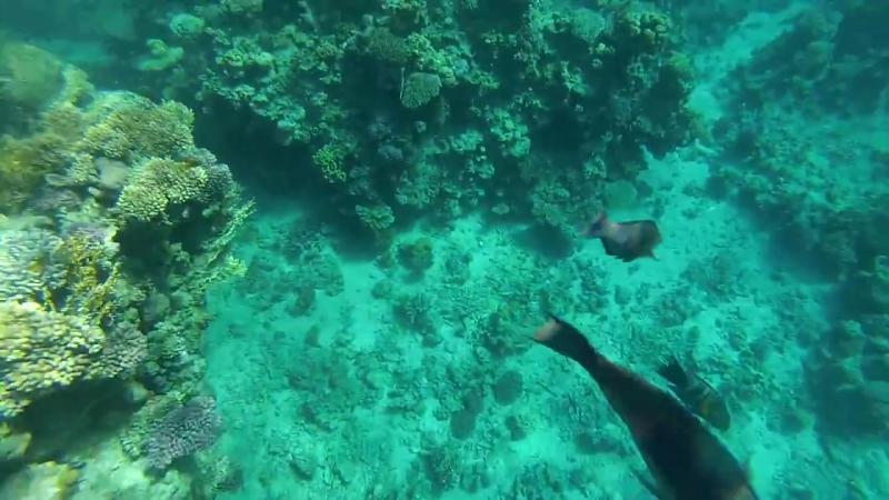 Карибское море (Кайо-Ларго)