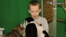 Ульяновцам - релакс, котам – новый дом. Где можно отдохнуть и пообщаться с животными