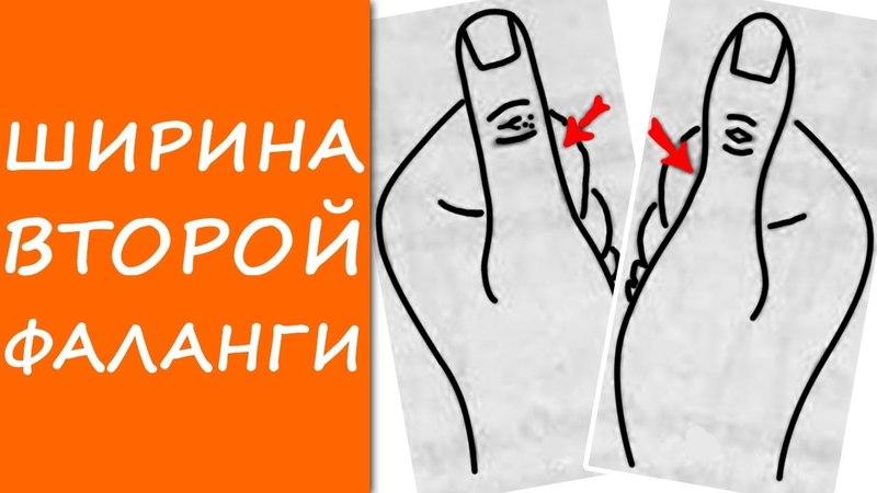 ШИРИНА ВТОРОЙ ФАЛАНГИ большого пальца / ХИРОМАНТИЯ / КЛАДЕЗЬ ХИРОМАНТИИ