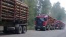 Граждане СССР останавливают грабёж Родины. Вырубка леса