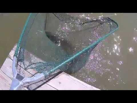 48 часов База рыболов 12 бент трудовая рыбалка