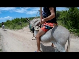 Riding little donkey on his hind legs