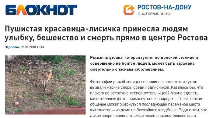 Пушистая красавица-лисичка принесла людям улыбку, бешенство и смерть в центре Ростова