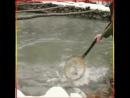 Ирон рыба IRTube