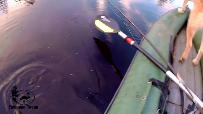 Таёжная тропа Рыбалка на слиянии двух рек в Карелии Ловля щуки на самоловки и спиннинг Ночёвка Белые ночи