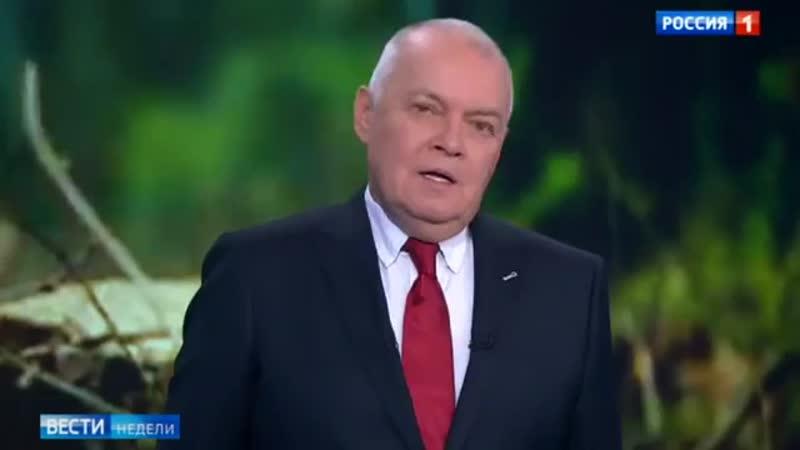 Лесная мафия безжалостно уничтожает даже реликты Россия 24