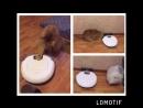 робот пылесос и кошки