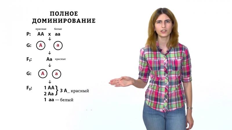 Моногибридное скрещивание и взаимодействие аллелей. Решение генетических задач -