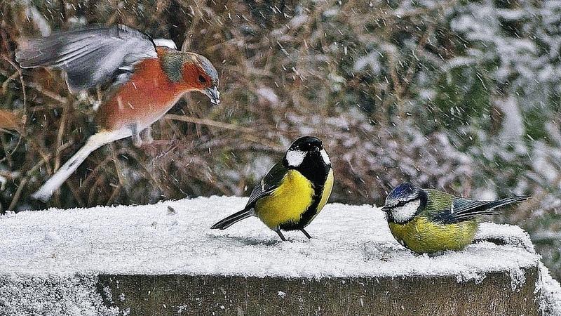 Videos Para Gatos Pájaros en la nieve ❄️
