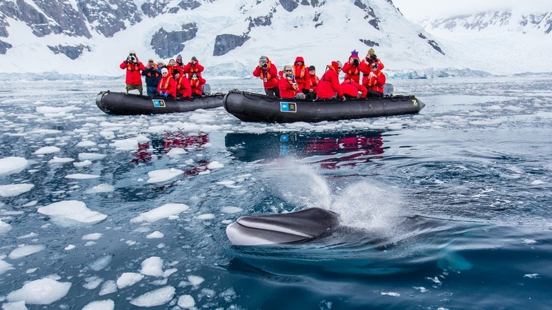 Close Encounter with Minke Whale in Antarctica