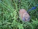 Знакомство кролика кубика с кузнечиком. Кубик обожает слушать кузнечиков, но никогда их не видел