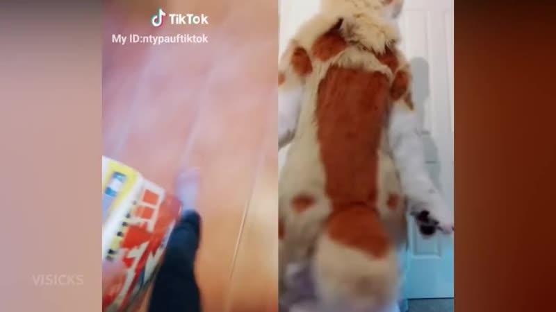 [Visicks] Funny Tik Tok MEMES COMPILATION V9