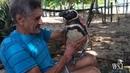 Пингвин ежегодно проплывает более 8 тыс км ради пожилого бразильца