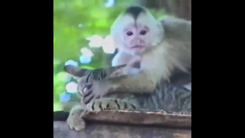 Понаехали обезьяны и жарят наших кислк