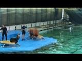 Дельфинарий на Крестовском 3