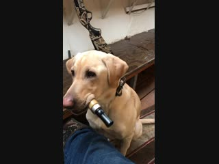 Good boy does the duck calls so his owner can focus on hunting