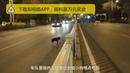 Собака ждет на дороге свою хозяйку, которая никогда не придет