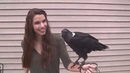 "ᴛʜᴇ ʜᴏʀʀᴏʀ ɢᴀʟʟᴇʀʏ on Instagram: ""Ravens can talk !! Almost had it 🤣 @talonsandteeth"""