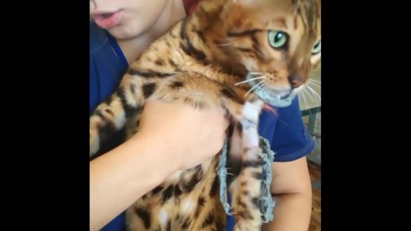 В Уфе ветеринары собрали робокота бедного питомца восстановили «по деталям»