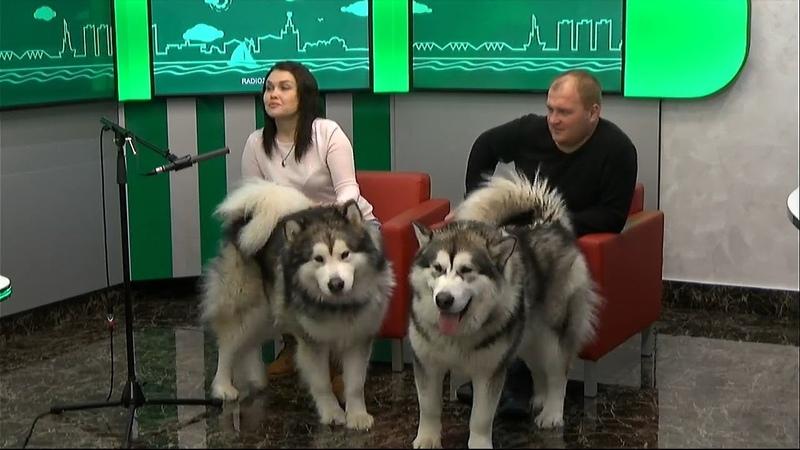 Татаров Дмитрий и Старцева Ксения, организаторы соревнований на собачьих упряжках «Легенда Амура».