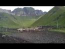 Гъудгъуларин сув. Ферма в Хутхуле с овцами в загоне.