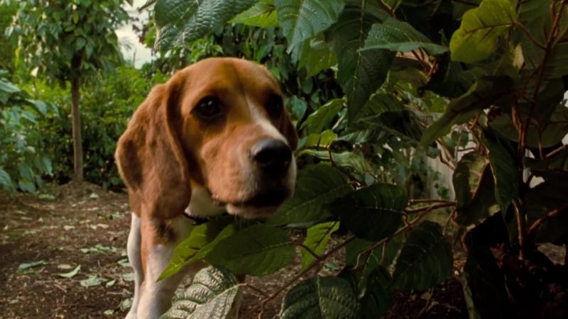 Кошки против собак 2001 Фентези Семейное кино HD