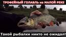 ТРОФЕЙНЫЙ ГОЛАВЛЬ на МАЛОЙ РЕКЕ Такой рыбалки никто не ожидал TROPHY CHUB on a SMALL RIVER