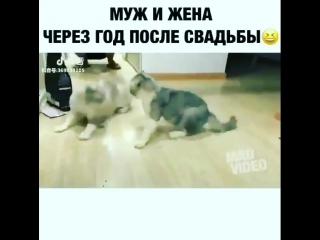kavkaz_vines_BnUDXtUA7nv.mp4