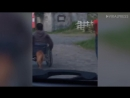 Pet Dog Pushes Disabled Owner In Wheelchair