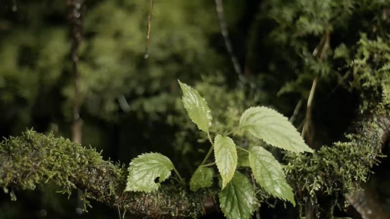 Дождь падает на листья Rain Falling Down on Leaves