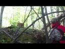 Calf Rescued from Steep River Bank __ ViralHog