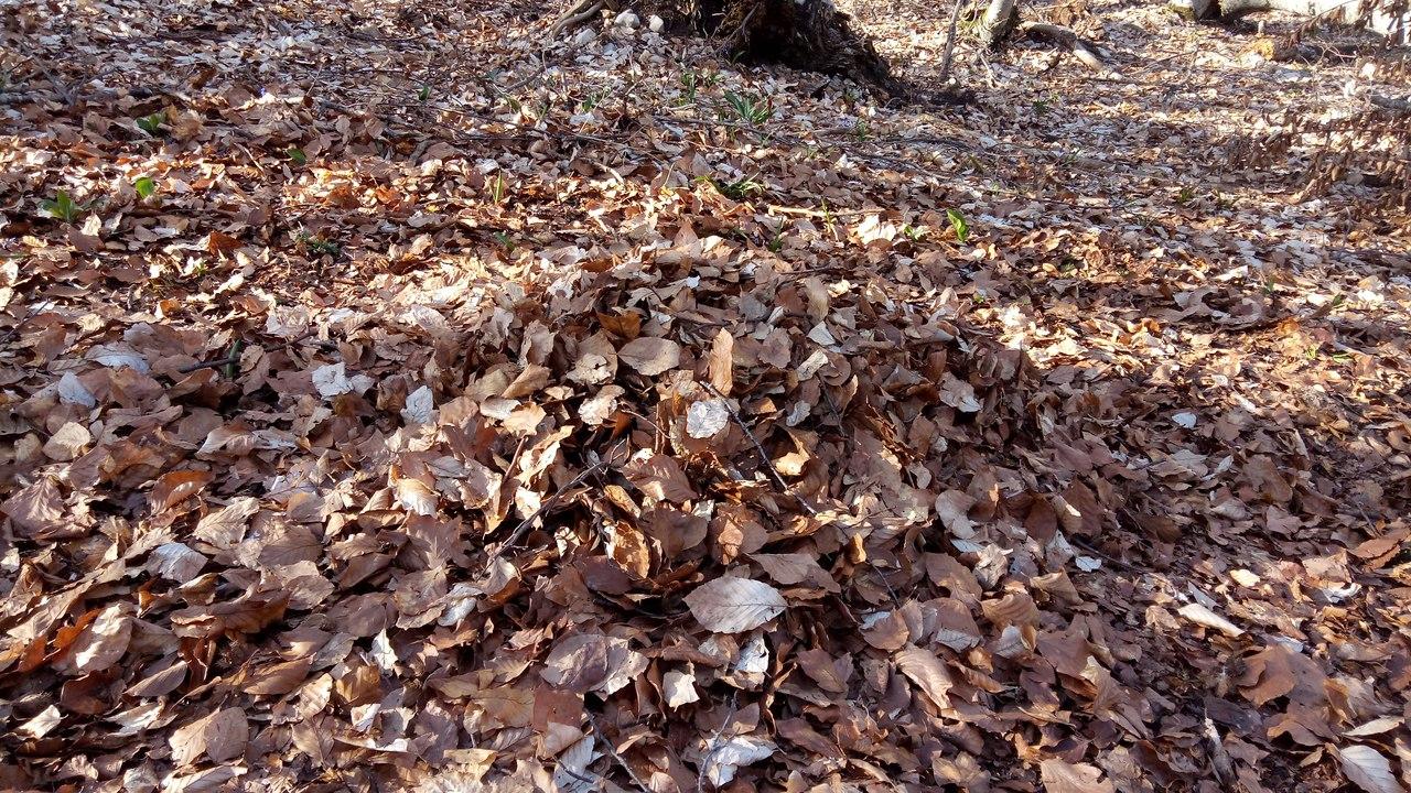 Сгребаю листву