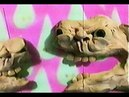 Shattered Molars Jack Stauber
