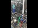 змеи в автосервисе