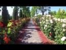 Эльмира Уразбаева – Город родной или Песня о Душанбе. Песня из фильма Любит или не любит 1963, киностудия ТаджикФильм.