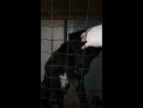 Кормящая мать, родившая своих 4 щенков, приняла и выкармливает еще 7 подкидышей!15.03.2018
