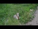 Бездомная кошка играет со своим котенком Homeless cat playing with her kitten