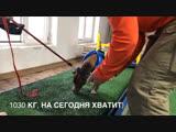 Pit bull training