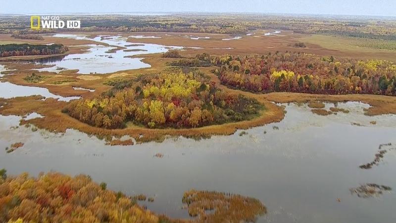 Величественная Миссисипи. Nat Geo Wild: На границе с дикой природой (1080р)