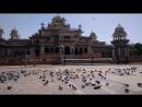 Albert hall pigeons