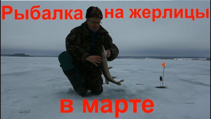 Рыбалка на жерлицы в марте