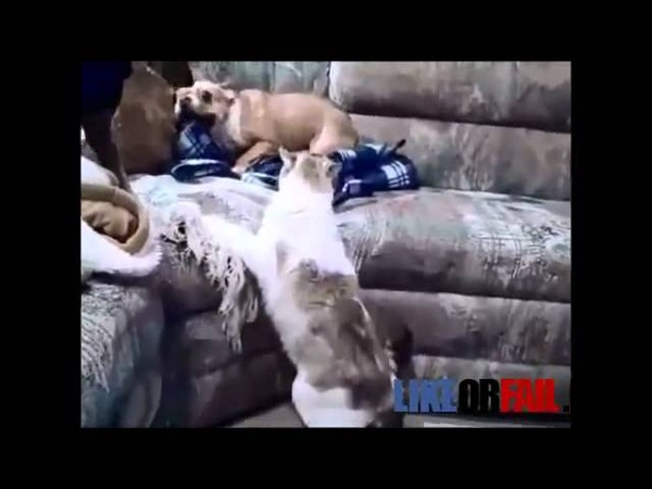 Scared Dog Gets A Surprise Cat Attack