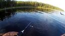 Рыбалка в Северной Карелии Пяозеро 2017 ОКУНЬ