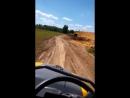 поле кукурузово Малино
