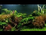 #FAAO #Aquascaping #plantedaquarium Update ¦ Aquafloras 1400L Nature Aquarium ¦ Interzoo showtank