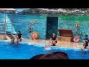 Дельфинарий Немо. г. Анапа. Поют дельфины и белый полярный кит