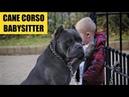 CANE CORSO PROTECTING BABIES | Italian Mastiff